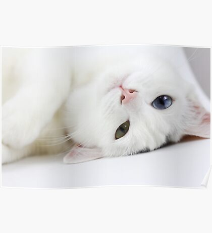 Playful Kitty Poster