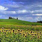 Tuscany landscape by annalisa bianchetti