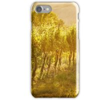 Vineyard rows in Marche, Italy iPhone Case/Skin
