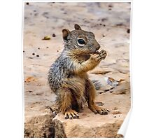 Little Squirrel Eating a Nut at the Grand Canyon Poster