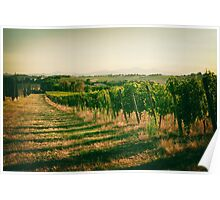 Vineyard fields in vintage style in Marche, Italy Poster