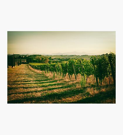 Vineyard fields in vintage style in Marche, Italy Photographic Print