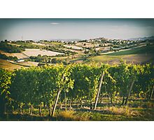 Vineyard fields in front of Morro d'Alba in Marche, Italy Photographic Print