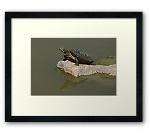 Western Painted Turtle Framed Print