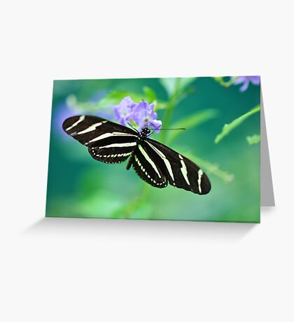 Zebra Longwing - Heliconius charitonia Greeting Card