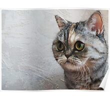 Scottish Fold Surprized Look Poster