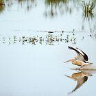 Pelican by ADAMAS