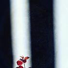 Red leaves by Lynn Starner