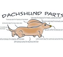 Dachshund Parts Poster/Card by Diana-Lee Saville