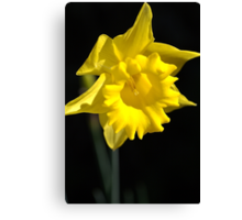 The Daffodil Glows Canvas Print