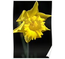 The Daffodil Glows Poster
