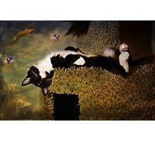 Feline Fantasia Photographic Print