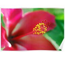 Fijian beauty Poster