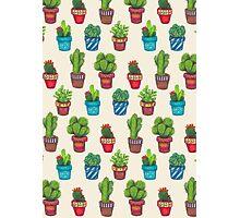 Cactus Pot Plant Garden Photographic Print