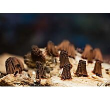chocolate bunches Photographic Print
