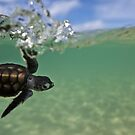 Turtle-tastic by David Wachenfeld