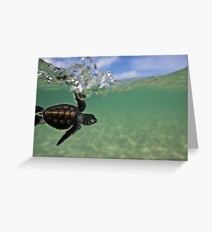 Baby surfing ninja turtle Greeting Card