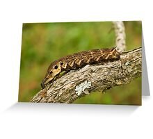 Elephant Hawk-moth Caterpilar Greeting Card