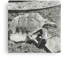 Turtle art Canvas Print