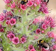 Busy Bees by Francis Drake