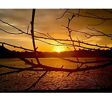 Branches in Sunset Photographic Print