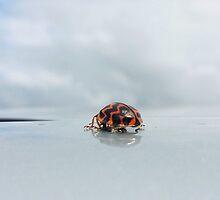 Ladybug by Judi Rustage