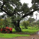 Tractor by Charuhas  Images