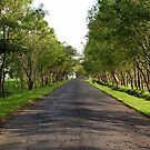 Road by Charuhas  Images