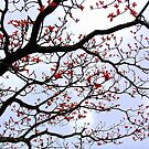 Branches by Charuhas  Images