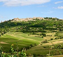 Montepulciano on the Hill by Barbara  Brown