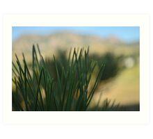 Pine Needles On The Flatirons Art Print