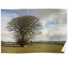 Lone tree in rural Devon Poster