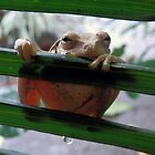 frog in the rain or leaky bum by gruntpig