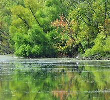 Early Autumn Reflections  by lorilee