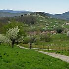 The Vosges Mountains by Evelyn Laeschke