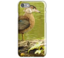 Young Drake Wood Duck  iPhone Case/Skin