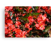 Pattern with red flowers and leaves. Canvas Print