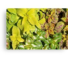 Pattern with colorful yellow green leaves. Canvas Print