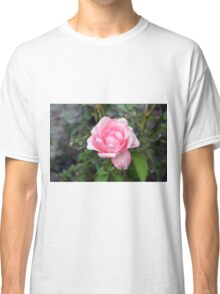 Pink rose, natural background. Classic T-Shirt