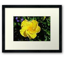Yellow delicate flower on green leaves background Framed Print