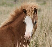 Welsh Mountain Filly by Diana-Lee Saville