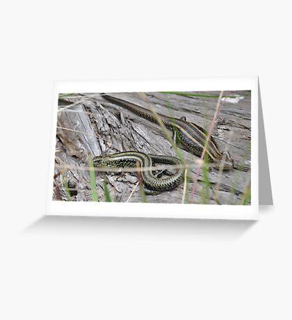Swamp Skinks. Greeting Card