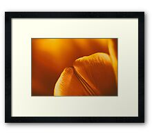 Red And Orange Tulip Flower Petals Framed Print