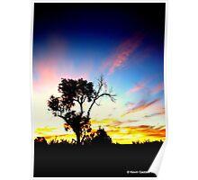 Tree in Australian outback sunset Poster