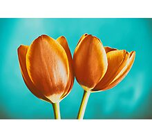 Red And Orange Tulips Flowers Bouquet Photographic Print