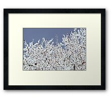 White Apple Tree Flowers Spring Blossom Framed Print