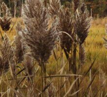 Salt Marsh Reeds Sticker