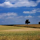Wheat Field - JUSTART ©  by JUSTART