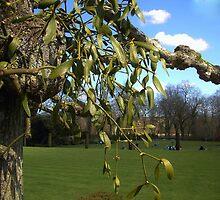Mistletoe by lezvee