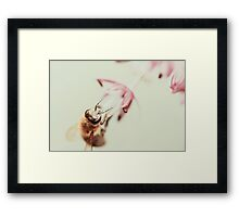 Macro Photo Of Bee Gathering Pollen From Purple Allium Flower Framed Print
